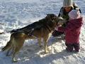 Nemzetközi kutyaszánhajtó verseny lesz Galyatetőn