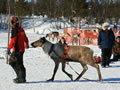 Télűző mulatságok Alaszkában és Skandináviában