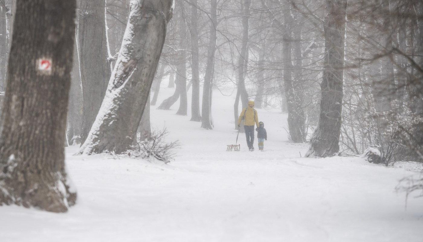 Havazás az országban: szánkózók a Normafánál